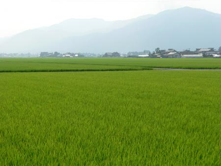Rice fields in the plains of Hikawa, Shimane prefecture, Japan