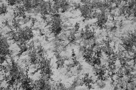 Sand plant growth pattern