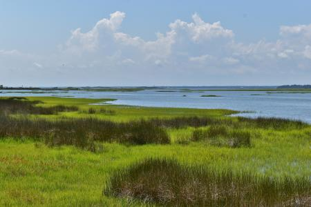 Scene marsh and egret emerald isle woods ncwetlands AM (9)