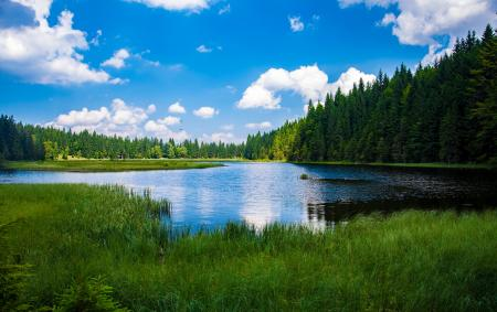 Scenic View of Lake in Forest