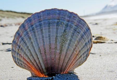Sea Shells (31)