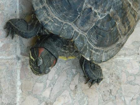 Sea-Turtle Head