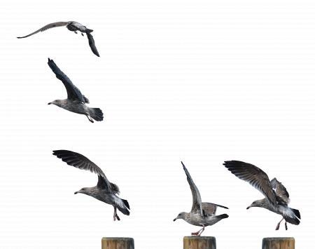 Seagull Landing
