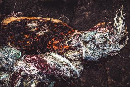 Seaweed in Fishnet Texture