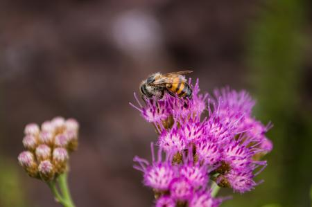 Selective Focus Photography of Bee on Purple Petaled Flower