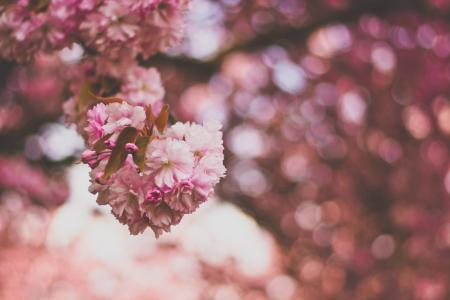 Selective Focus Photography of Pink and White Petaled Flowers