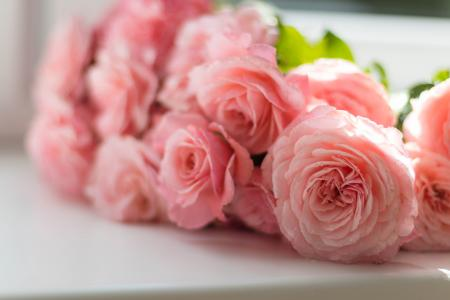 Selective Focus Photography of Pink Peony Flowers