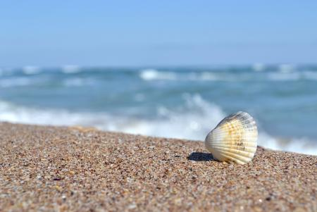 Shell by the beach