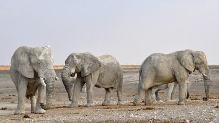 Side View of Elephant in a Row Against the Sky
