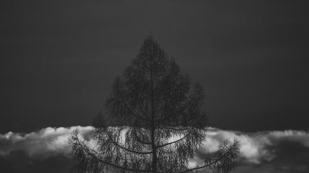 Silhouette If Tree in Grayscale Photography