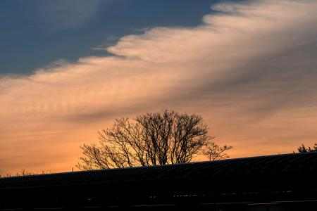 Silhouette of Leafless Tree Under Cloudy Sky