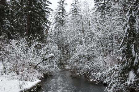 Silver creek 3