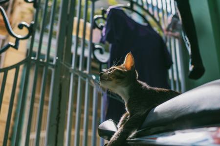 Silver Tabby Cat Tilt Shift Lens Photography