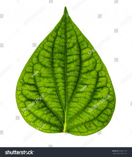 Single green leaf