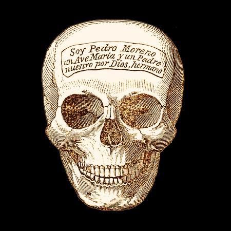 Skeleton Head