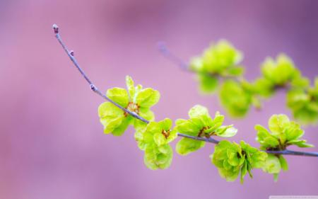 Small green flowers