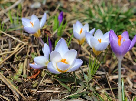 Spring has sprung