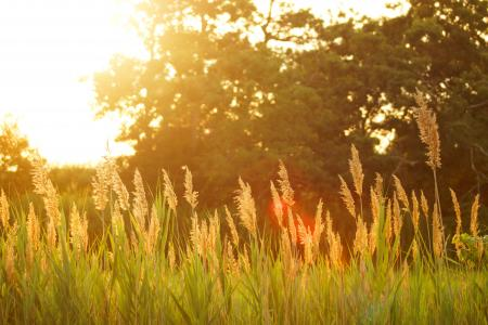 Sun Shining on Grass in Field