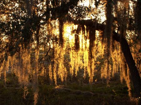 Sunset and spanish moss