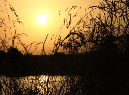 Sunset on the lake with grass silhouette