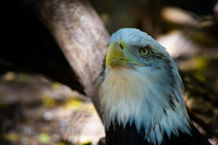 The bright eagle`s looking deep in the forest