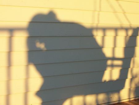 The Sad Shadow