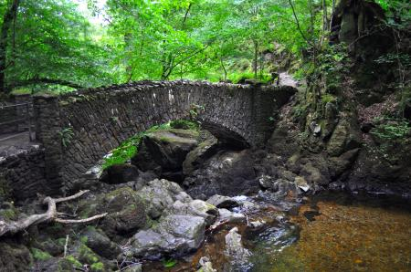The Woodland Bridge