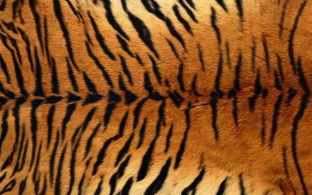 Tiger Skin Print