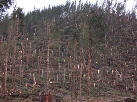 Tornado Damaged Forest