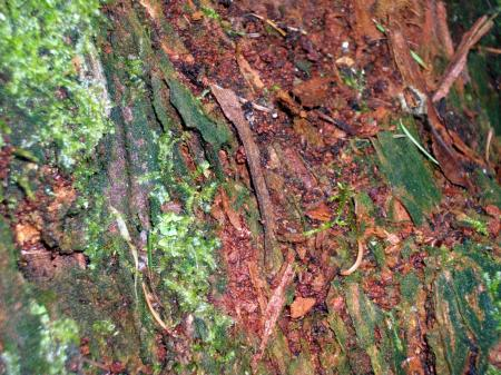 Tree bark with plant growth