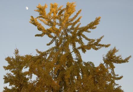 Tree in the Light of Dusk