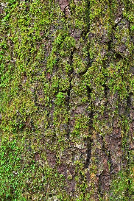 Tree Moss - HDR Texture