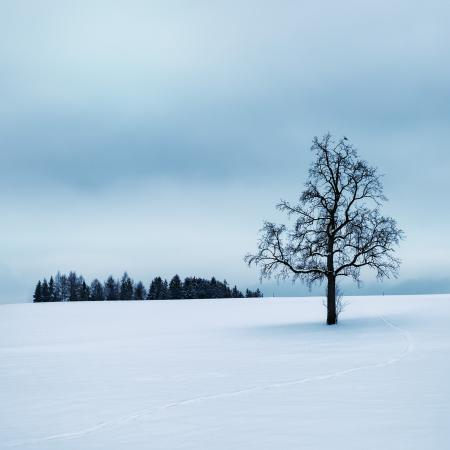 Tree Surrounded by Snow