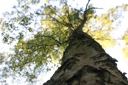Tree Woodlands