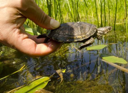 Turtle in basin