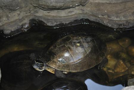 Turtle on the Pond