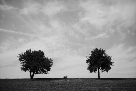 Two and a half tree
