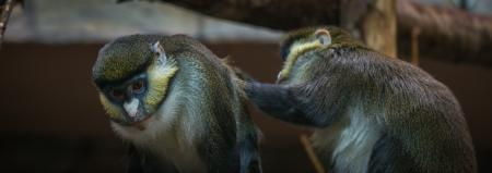 Two Brown-and-black Primates