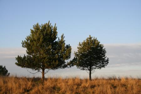 Two trees in the field