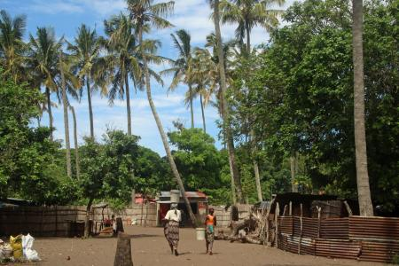 Village in the palm forest