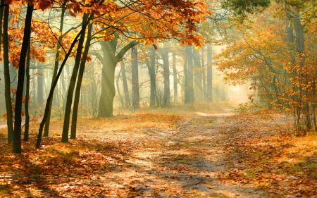 Virtual Autumn Background
