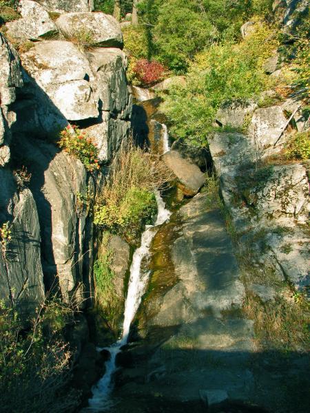 Waterfall in Ponderosa Pines