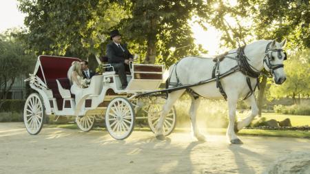 White horse carriage