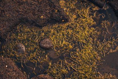Wet Green Seaweed Texture
