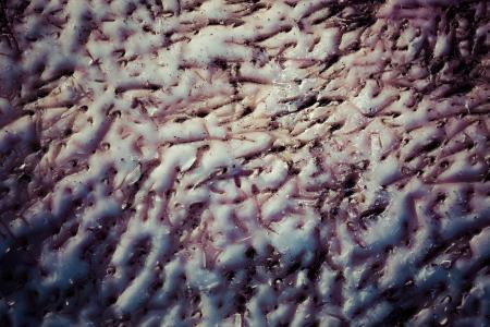 Whale Skin Background