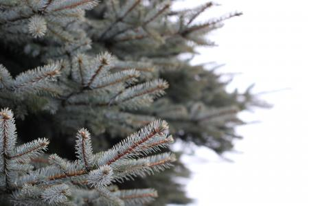 White and Brown Pine Tree Selected Focus