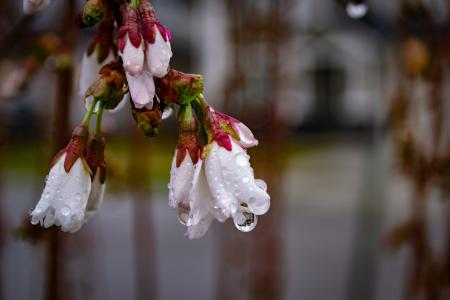 White and pink flowers with dew drops