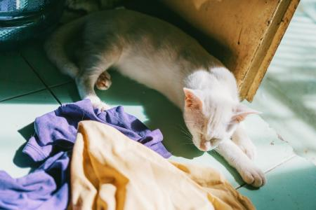 White Cat Near Door and Assorted Textiles