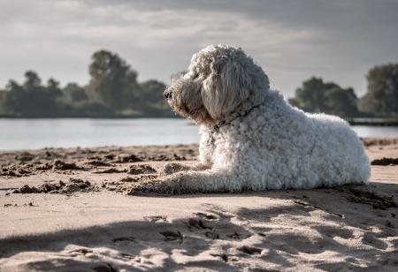 White Dog Sitting on Seashore