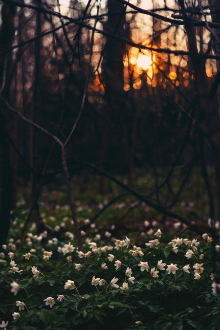 White Flower Field Under Twigs